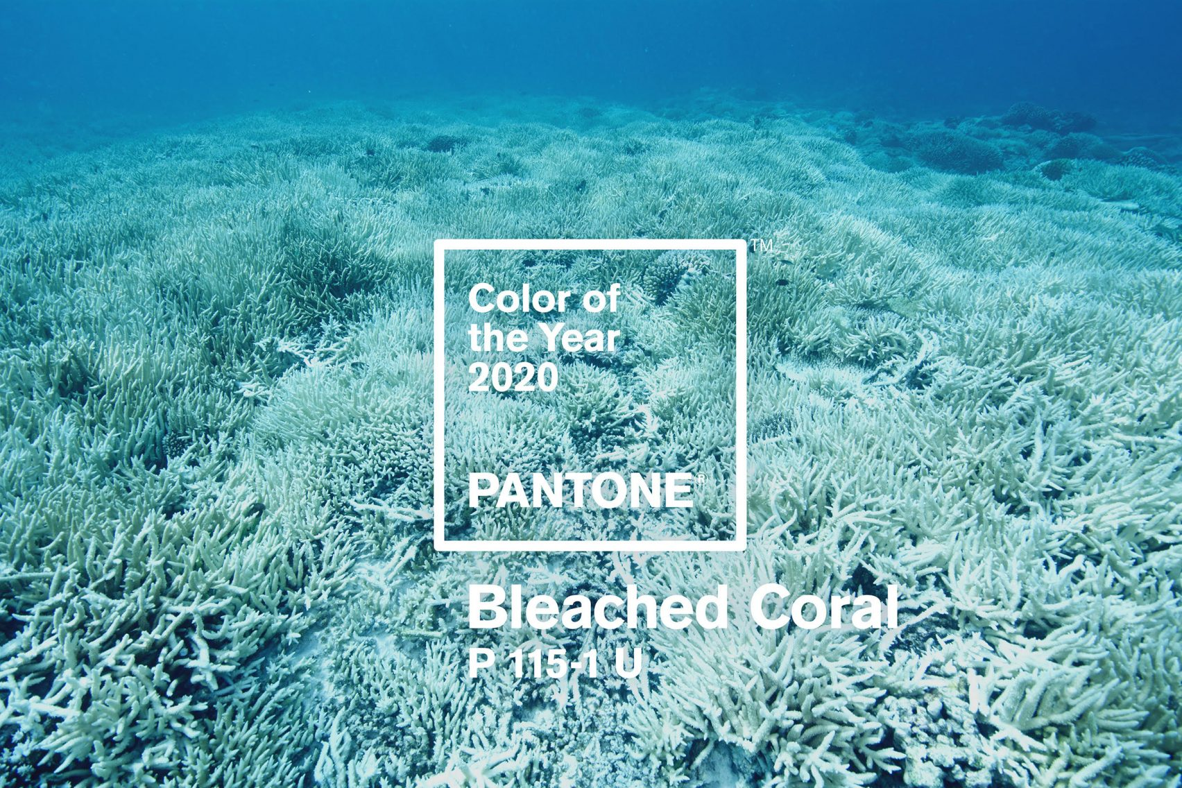 Bleached Coral for color of the year 2020